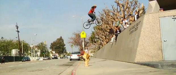 Animal Street Jam LA