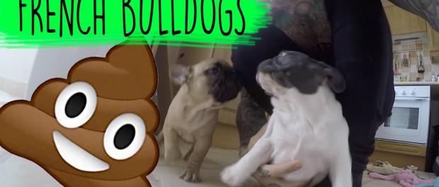 OMG! my Dogs Had the SH*TS with Harry Main