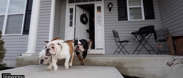 SCOTTY'S BULL DOGS + SKYLINE GTR!