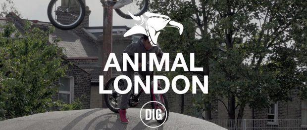 Animal London – DIG BMX
