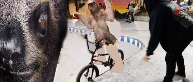 SLOWEST ANIMAL IN THE WORLD RIDES A BIKE?