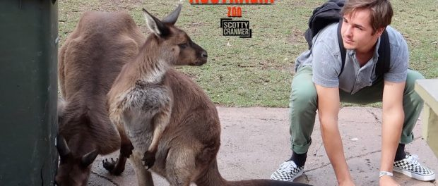 GOING FULL KANGAROO AT AN AUSTRALIAN ZOO!