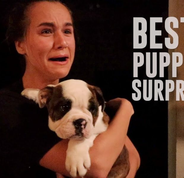 The Cutest Puppy Surprise Ever!