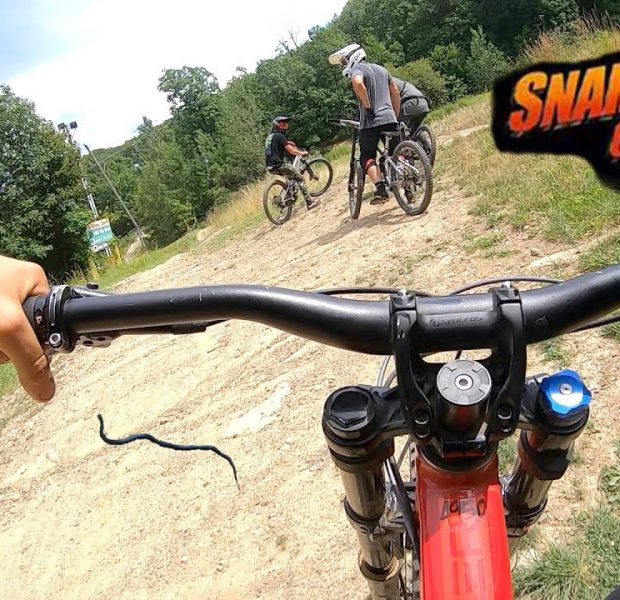 Downhill MTB And Snakes Don't Mix!